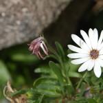 Detalle - flor silvestre
