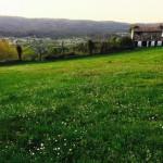 Verde prado