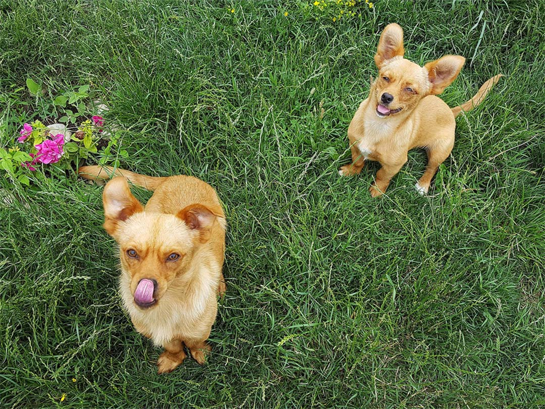 Las Casitas de Samieira somos alojamientos dog friendly