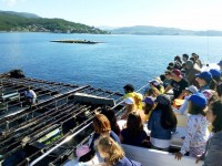Visita a las bateas en la Ruta de Combarro con Catamaranes Combarro