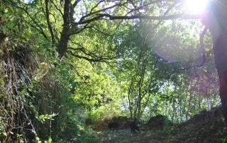 Ruta de senderismo con perros en Cerdedo